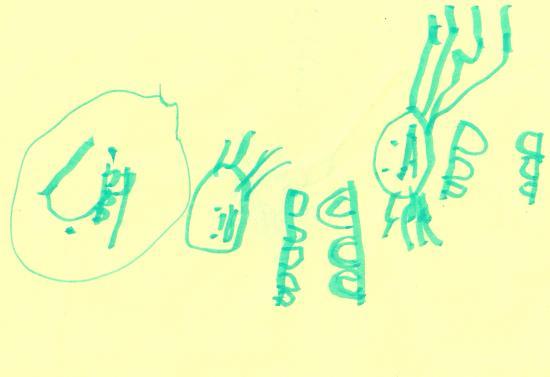 Kismi le chipiron - Ernest 4 ans